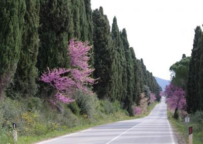 Bolgheri Wein Tour in der Toskana