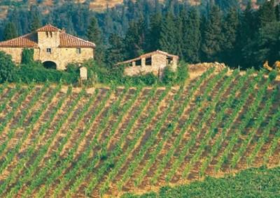 Langhe Wein Tour